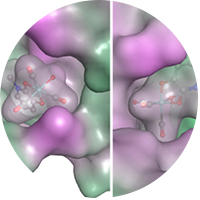 Fragments and protein are shown with molecular surface maps colored to indicate lipophilicity