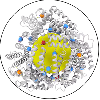 A rotating view of the protein cage